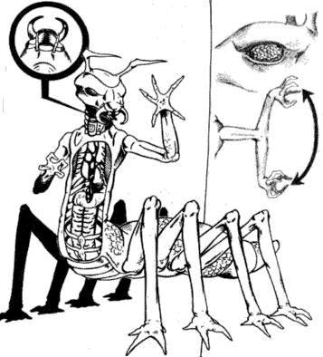 Vrusk Anatomy